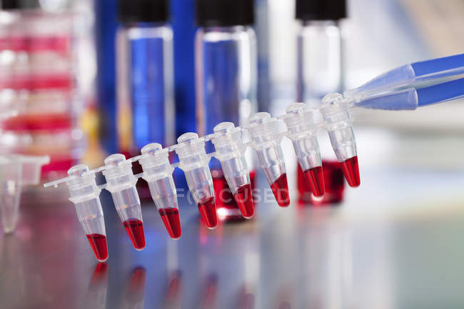 PCR micro tube strip with red liquid. — Stock Photo