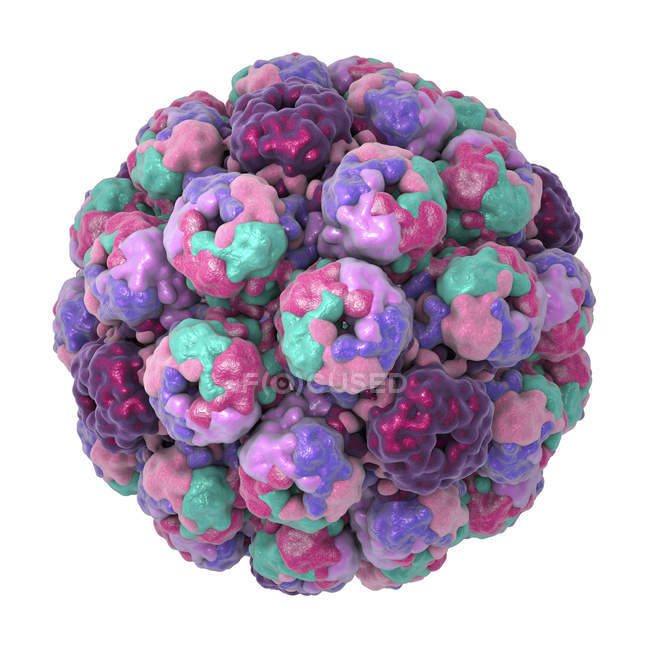 Ilustración digital de la cápside del virus del polioma BK . - foto de stock
