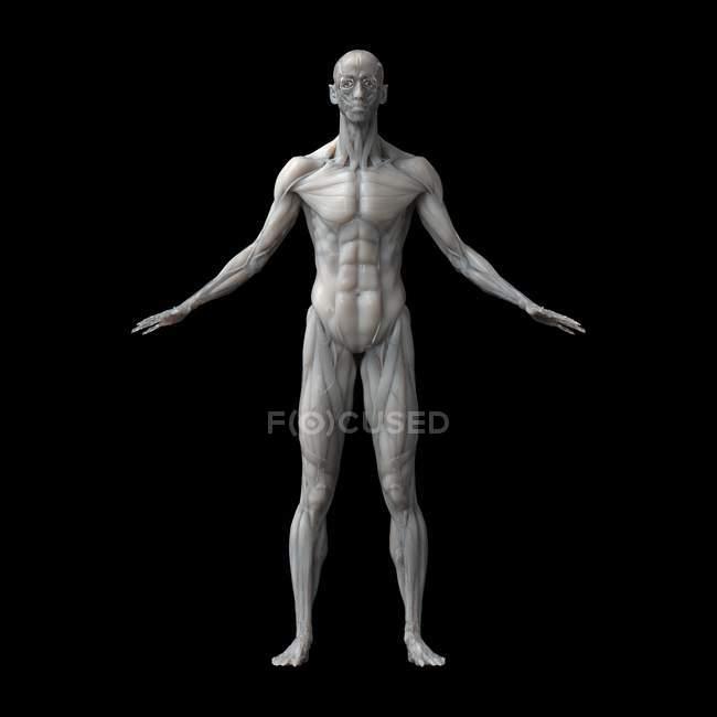 Musculatura humana silhueta masculina sobre fundo preto, ilustração . — Fotografia de Stock