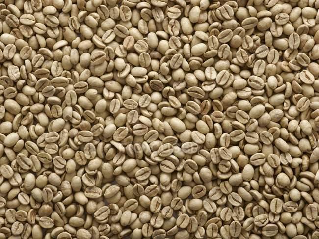 Свіжа сировина кави в зернах, повний кадр. — стокове фото