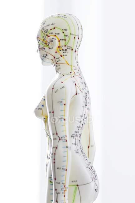 Modello di agopuntura con agopunti e caratteri cinesi, colpo dello studio — Foto stock