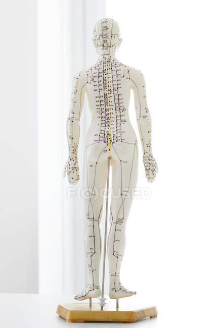 Acupuncture model with acupoints and chinese characters, studio shot — Stock Photo