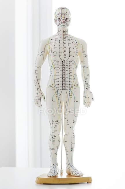 Modelo de acupuntura con acupuntura y caracteres chinos, plano de estudio - foto de stock