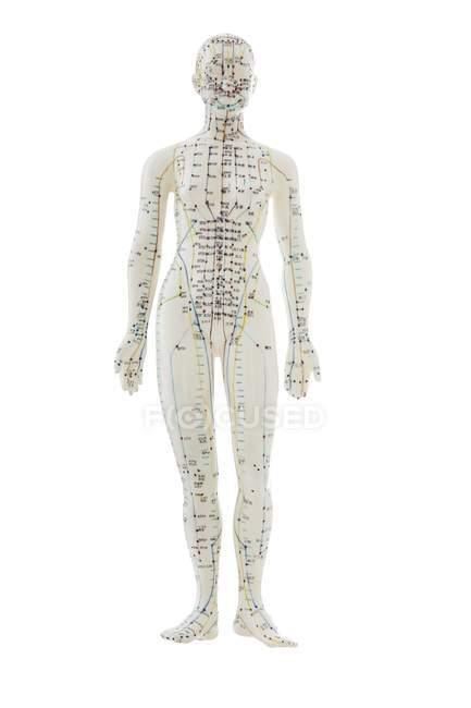Modello di agopuntura con agopunti su sfondo bianco — Foto stock