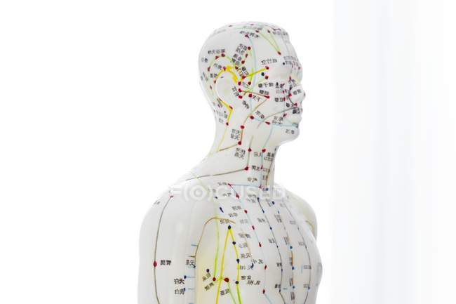 Acupuncture model with acupoints against white background. — Stock Photo