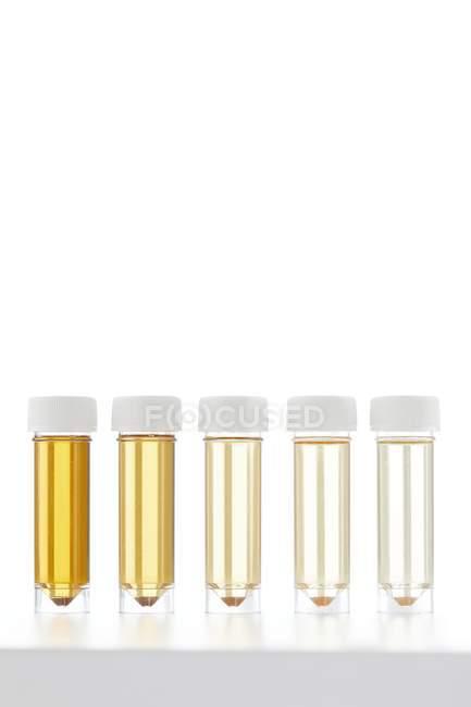 Tubos de ensayo con muestras de orina para análisis sobre fondo blanco, plano de estudio . - foto de stock