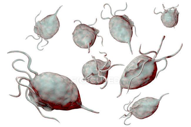 Trichomonas vaginalis parasitic microorganisms causing trichomoniasis, digital illustration. — Stock Photo