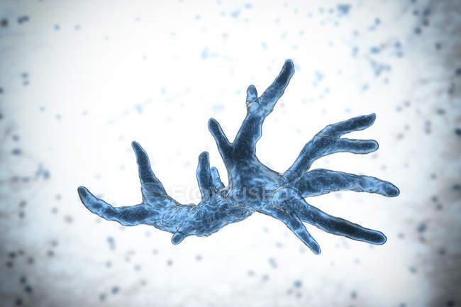 Balamuthia mandrillaris Amöbe Organismus, digitale Illustration. — Stockfoto
