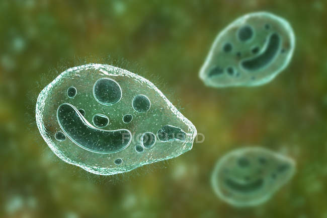 Digitale Illustration von ciliate Protozoon Balantidium coli Darmparasiten verursacht Geschwüre im Darm-Trakt. — Stockfoto