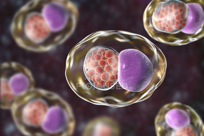 Obra digital que muestra la inclusión compuesta por un grupo de cuerpos reticulados de clamidia de la bacteria Chlamydia trachomatis . - foto de stock