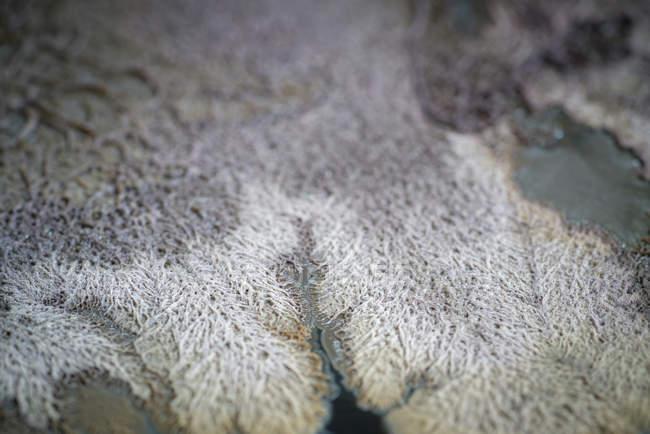 Культура микроорганизмов, растущих в чашке Петри, полный кадр. — стоковое фото