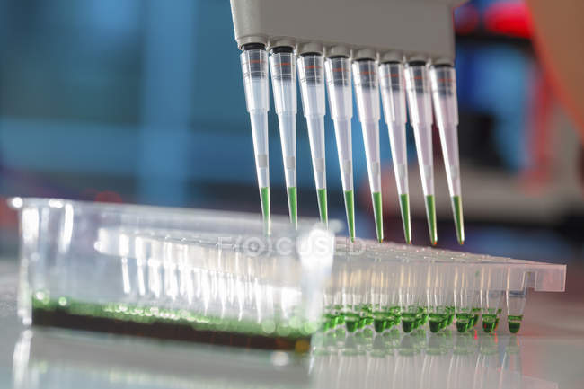 Close-up of multipipette sampling liquid into tube rack in laboratory. — Stock Photo