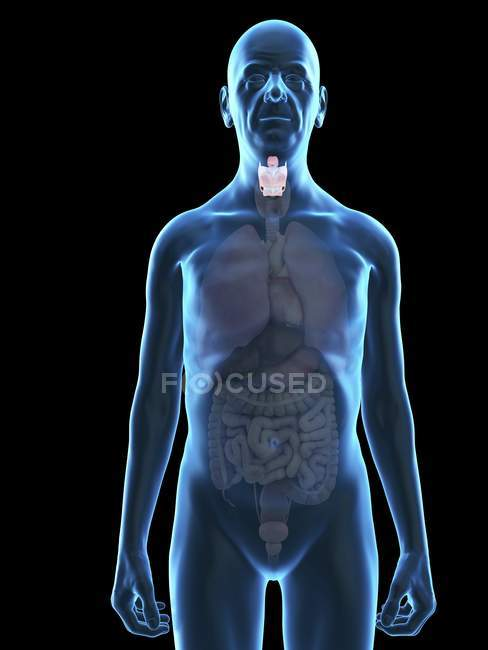 Illustration of senior man silhouette with visible larynx. — Stock Photo
