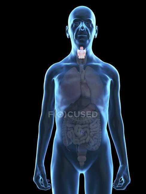 Illustration de silhouette d'homme âgé avec larynx visible . — Photo de stock