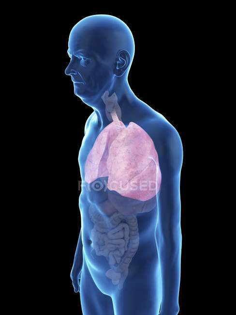 Illustration of senior man silhouette with visible lungs. — Stock Photo