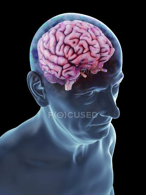 Illustration de silhouette homme senior avec cerveau visible. — Photo de stock