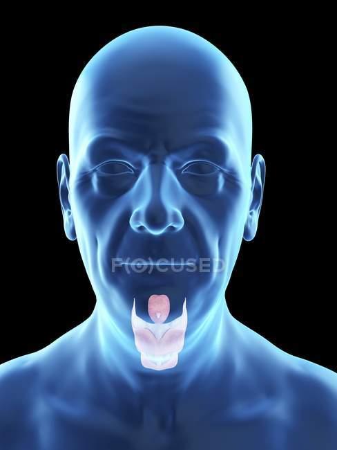 Ilustración de la silueta del hombre mayor con laringe visible . - foto de stock