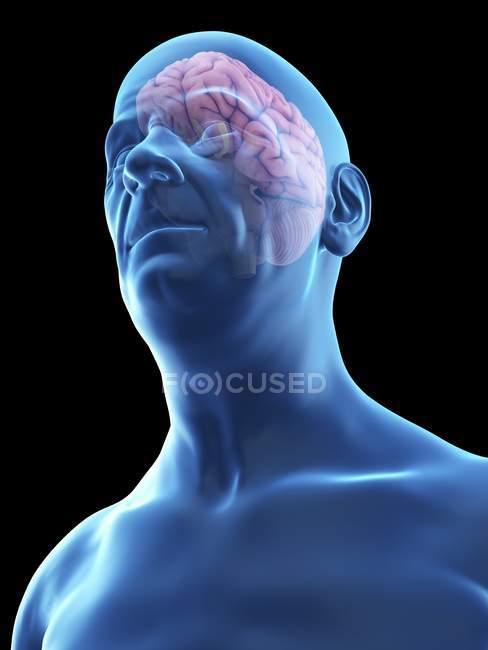 Ilustración de la silueta del hombre mayor con el cerebro visible . - foto de stock