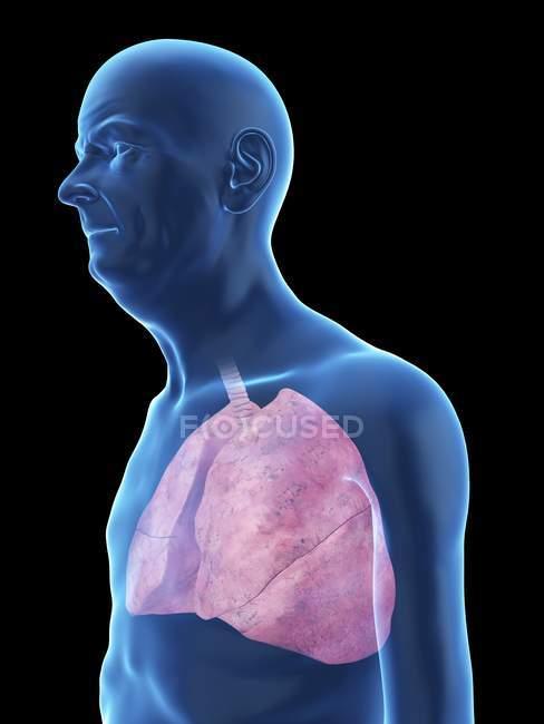 Ilustración de la silueta del hombre mayor con pulmones visibles . - foto de stock