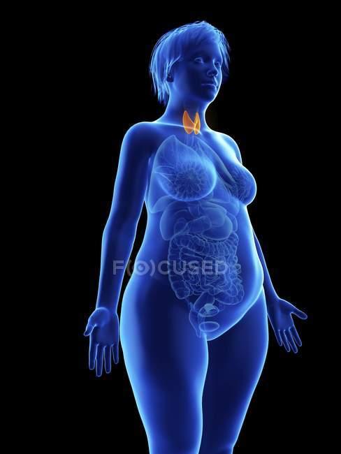 Ilustración de silueta azul de mujer obesa con glándulas tiroideas destacadas sobre fondo negro . - foto de stock