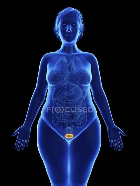 Ilustración frontal de la silueta azul de la mujer obesa con la vejiga resaltada sobre fondo negro . - foto de stock