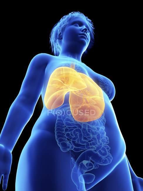 Низький кут зору ілюстрація синій силует ожирінням жінка з виділених легені на чорному фоні. — стокове фото