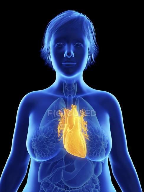 Ilustración sobre negro de silueta de mujer obesa con corazón resaltado . - foto de stock