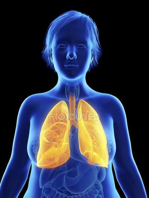 Ilustración sobre negro de silueta de mujer obesa con pulmones resaltados . - foto de stock