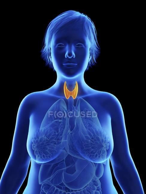 Ilustração em preto de silhueta de mulher obesa com glândula tireoide destacada . — Fotografia de Stock