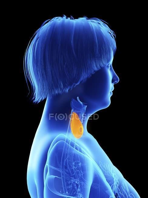 Illustration de vue latérale sur noir de silhouette de femme obèse avec surbrillance de la glande thyroïde . — Photo de stock