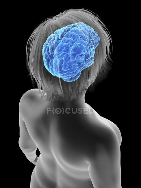 Ilustración de la silueta de la mujer obesa con el cerebro resaltado . - foto de stock