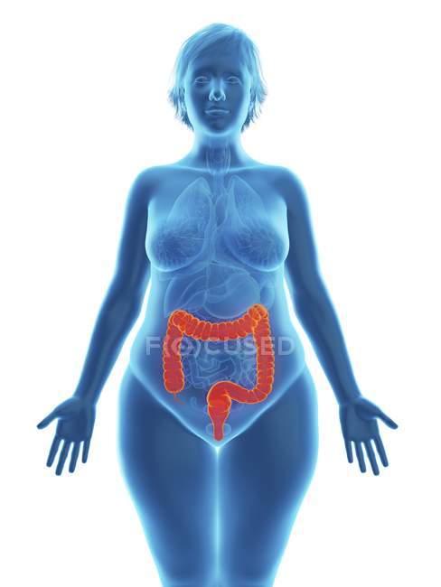 Ilustración de silueta azul de mujer obesa con colon resaltado . - foto de stock