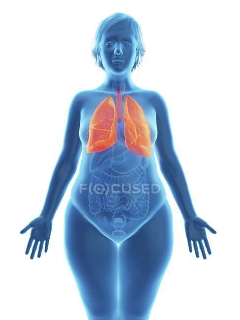 Illustrazione della silhouette blu della donna obesa con polmoni evidenziati . — Foto stock