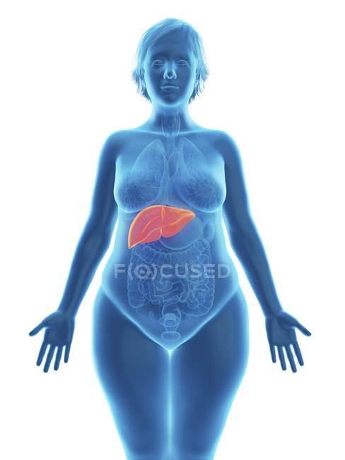 Illustration de la silhouette bleue d'une femme obèse au foie surligné . — Photo de stock