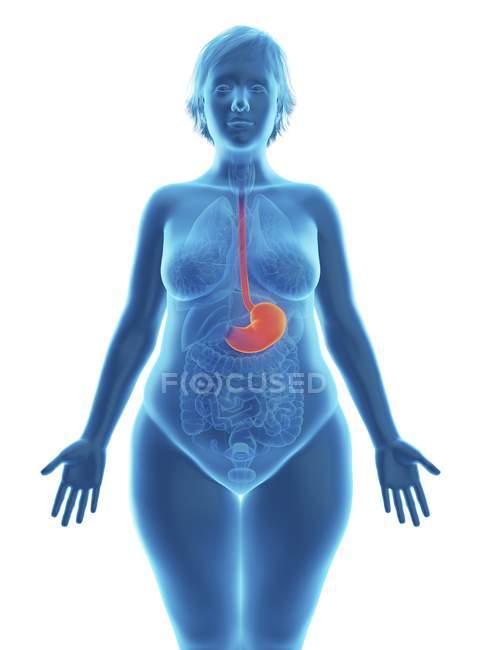 Ilustración de silueta azul de mujer obesa con el estómago resaltado . - foto de stock