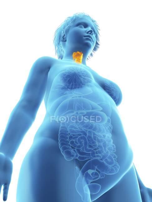 Ilustración de baja vista angular de silueta azul de mujer obesa con laringe resaltada . - foto de stock