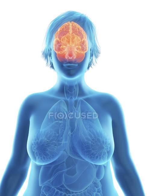 Ilustración de la silueta azul de la mujer obesa con el cerebro resaltado . - foto de stock