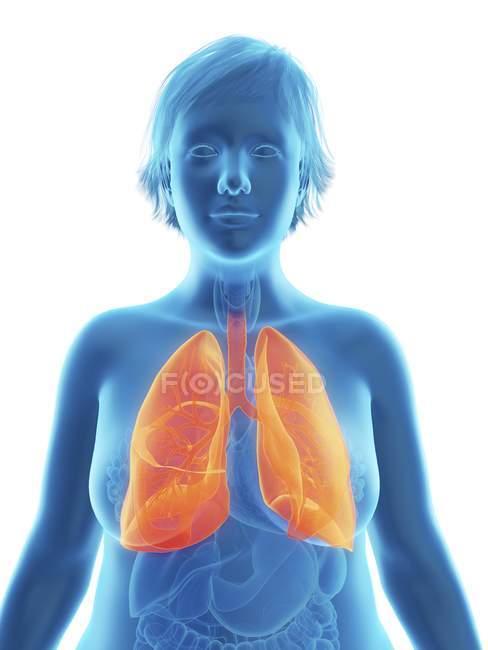 Ilustración de la silueta azul de la mujer obesa con los pulmones resaltados . - foto de stock