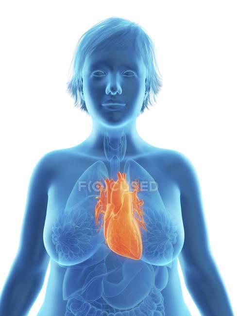 Ilustración de silueta azul de mujer obesa con corazón resaltado . - foto de stock