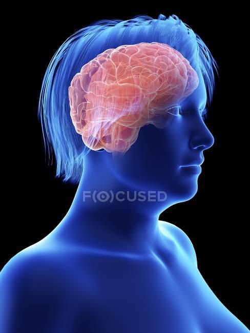Illustration de la silhouette bleue d'une femme obèse au cerveau surligné . — Photo de stock