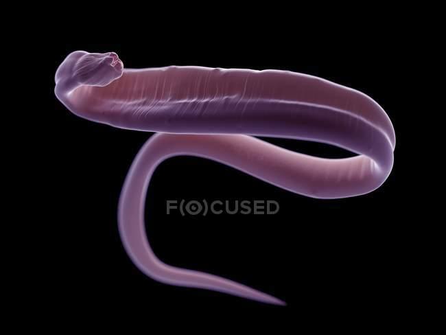 Illustrazione dell'ascaridiosi verme su priorità bassa nera. — Foto stock