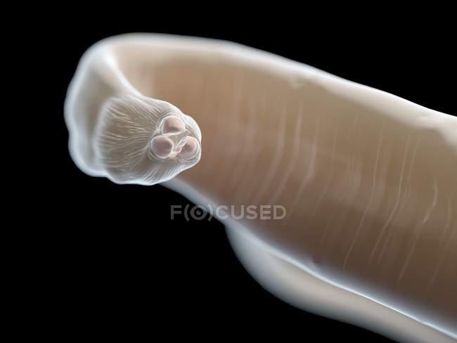 Ilustración de la ascaridiasis del gusano sobre fondo negro. - foto de stock
