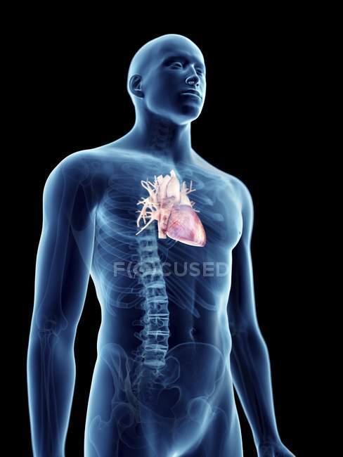 Ілюстрація серця в прозорих чоловічий силует. — стокове фото