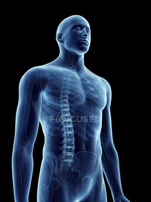 Illustration of skeletal thorax in transparent male silhouette. — Stock Photo