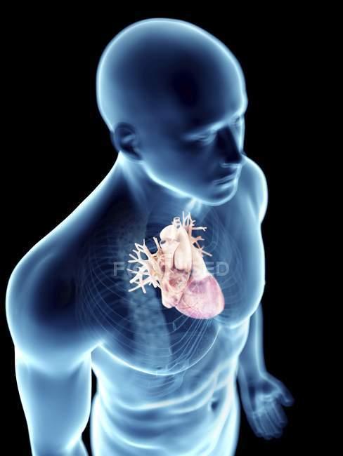 Иллюстрация прозрачного силуэта мужского тела с цветным сердцем . — стоковое фото