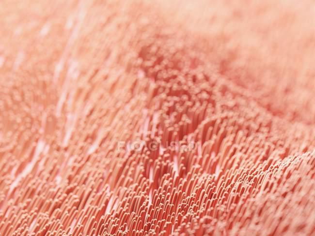 Ilustración digital de células de cilios humanos . - foto de stock