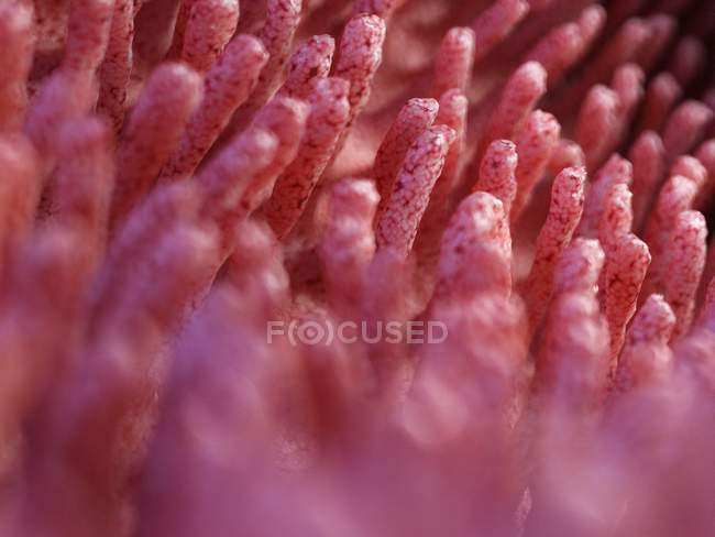 Medical illustration of inflamed intestinal villi. — Stock Photo