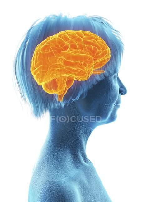 Illustration médicale de la silhouette d'une femme âgée avec un cerveau surligné sur fond blanc . — Photo de stock