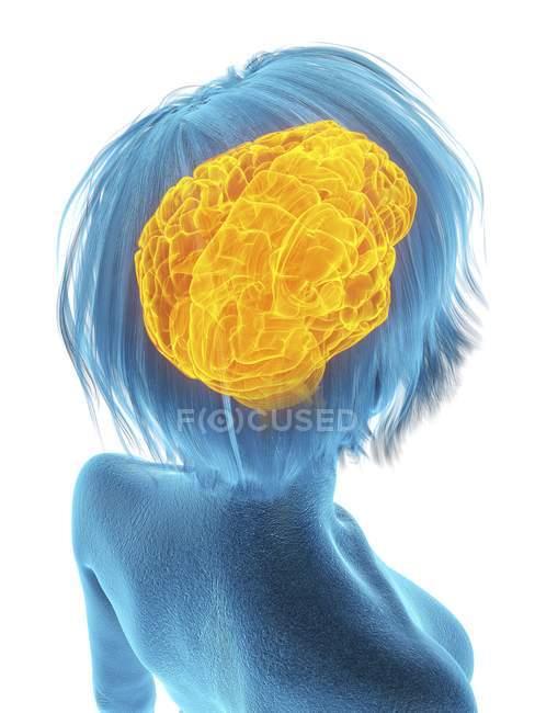 Медицинская Иллюстрация силуэт старшие женщины с выделенной мозга на белом фоне. — стоковое фото