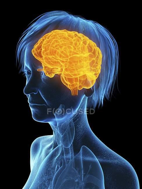 Ilustración médica de la silueta de la mujer mayor con el cerebro resaltado sobre fondo negro . - foto de stock